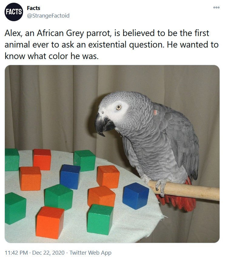 Alex, an African Grey parrot, is believed to be the first animal ever to ask an existential ques ...