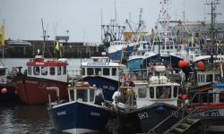 Defra sets up £23m fund for UK seafood exporters hit by Brexit