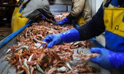Brexit problems halt some Scottish seafood exports to EU