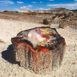 A 225 million year old petrified opal tree trunk located in Arizona