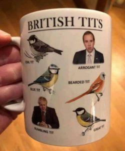 British Tits.