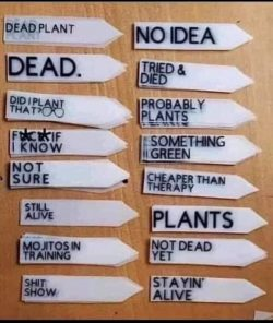 My kind of plant labels