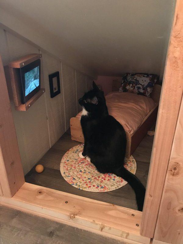 Cat's room