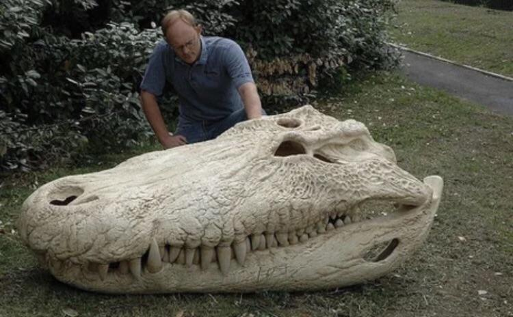 The skull of a Purussaurus, one of the biggest crocodiles to have ever lived