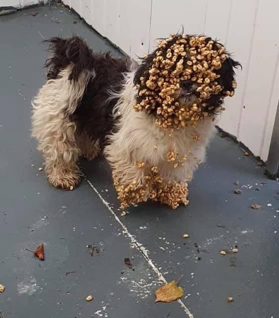 Dont feed the dog sugar puffs
