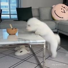Yoga bichon