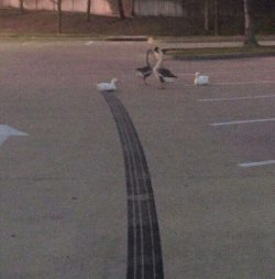 how fast was that duck going