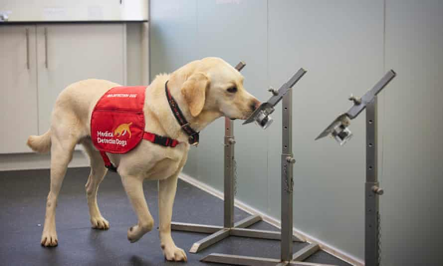 Faster than a PCR test: dogs detect Covid in under a second