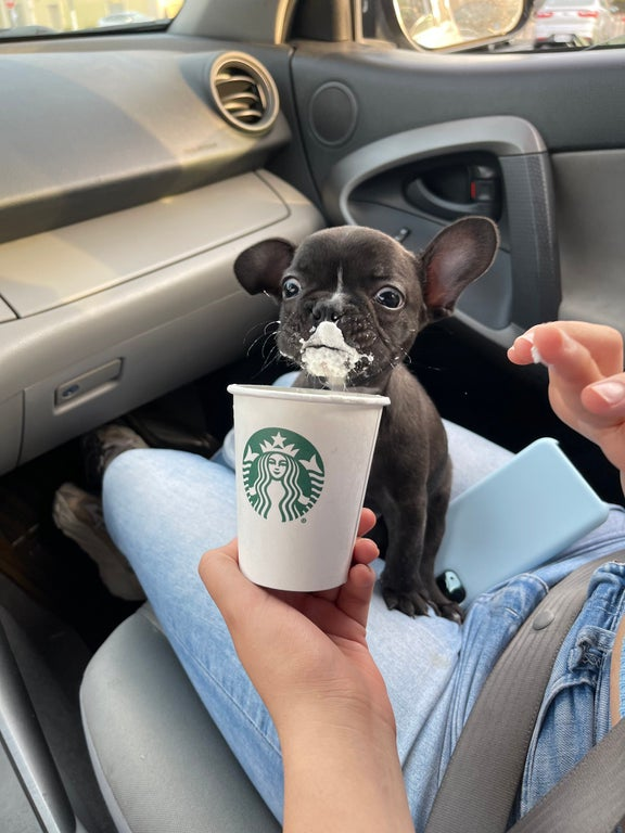First puppuccino