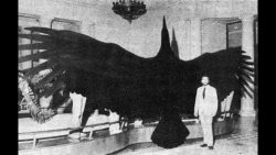 This size comparison between a human and one of the largest birds to exist; Argentavis