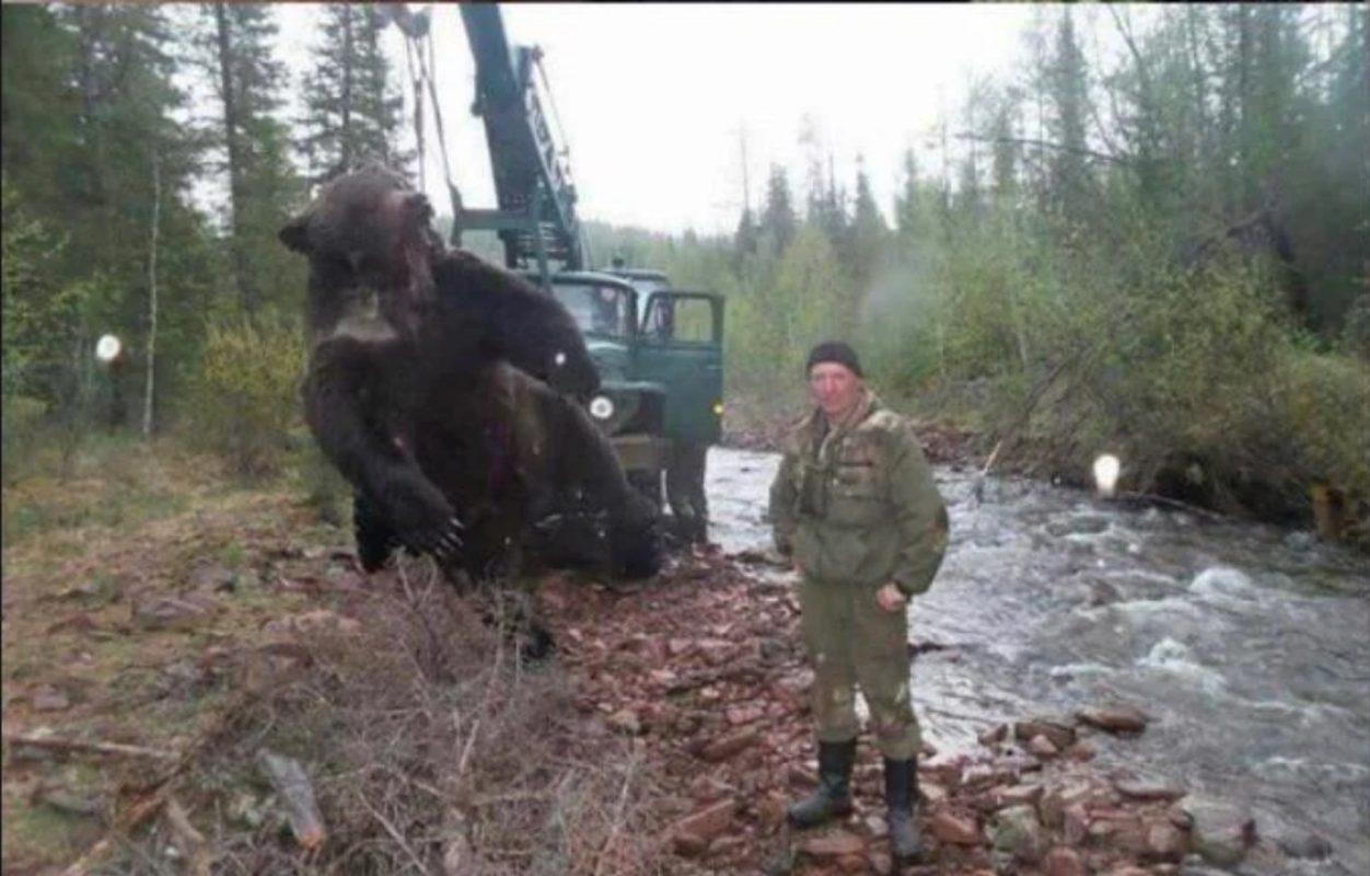 Thats a big bear