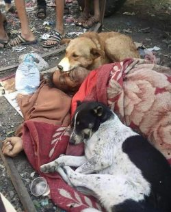 This homeless man fed street dogs who came to protect his body when he died on the street