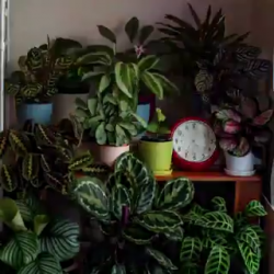 Plants are pretty active during the day