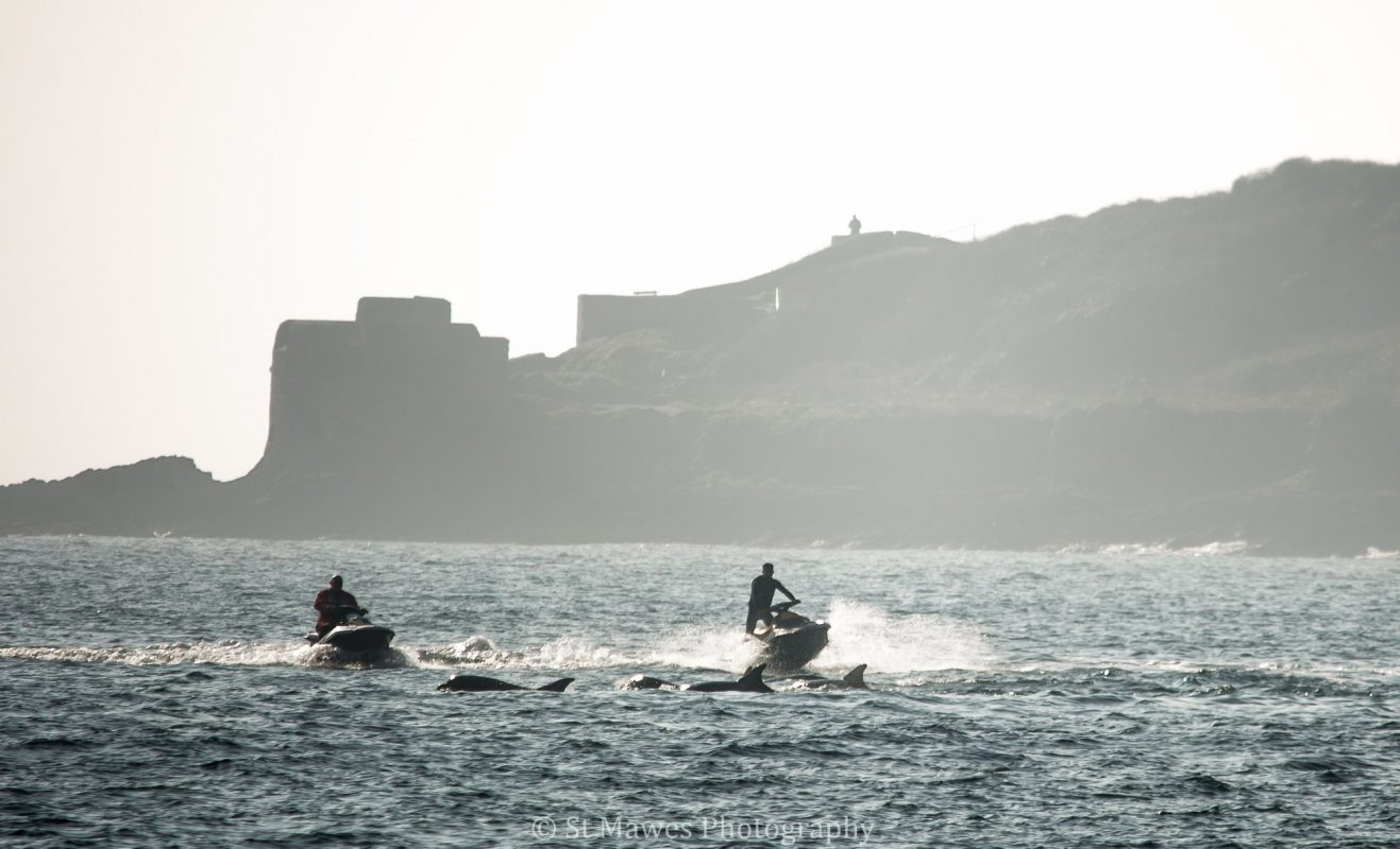 Number of marine animal disturbances triples in six years in Cornwall | InYourArea News
