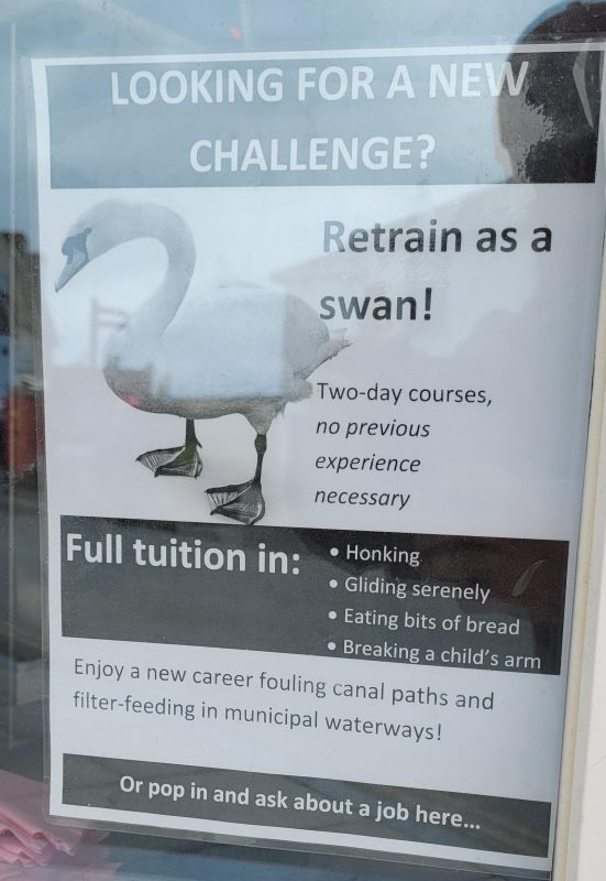 I want to be a swan