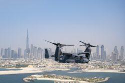 Osprey over Dubai